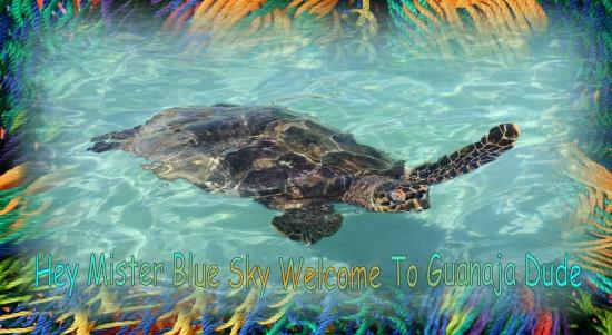 Guanaja Turtle Flips Hola