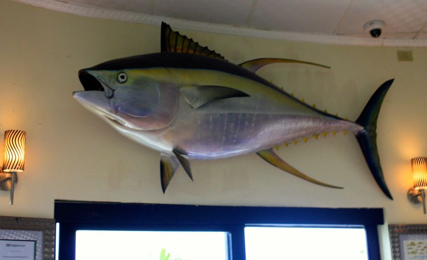 Former World Record Yellowfin Tuna Caught Out Of The Panama Big Game Fishing Club